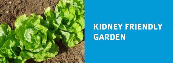 Kidney Friendly Garden